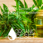 BLOG CBD Oil, Derived From Cannabis, Gains Popularity.png