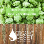BLOG More Benefits Of Beta-Caryophyllene.png