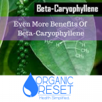 Even More Benefits Of Beta-Caryophyllene.png